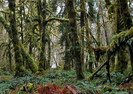 Olympic Park Rain Forest